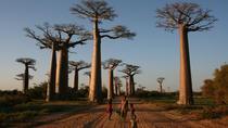 Morondava Day Tour to Kirindy Park and Baobab Avenue, Madagascar, Day Trips