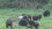 Odzala-Kokoua National Park Adventure Eco-Tourism Program 2017-18, Congo, 4WD, ATV & Off-Road Tours