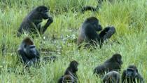 Odzala-Kokoua Park Discovery Camps- CCC Lango- Ngaga - Mboko Luxury Safari Camps, Congo, Cultural...