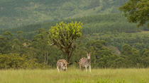 Swaziland Culture and Mlilwane Wildlife Sanctuary - 2 Days, Maputo, Cultural Tours