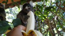 Tamatave-Toamasina Foulpointe and Ivoloina Park Day Tour, Madagascar, Cultural Tours
