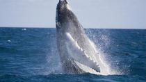 Half-Day Whale Watching e Canal Cruise dalla Gold Coast, Gold Coast