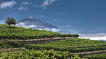 Bodegas Monje Winery Tour met wijnproeverij en Mojo Sauce-workshop, Tenerife, Wine Tasting & Winery Tours