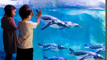 Billets coupe-file : aquarium Sea Life de Londres, Londres, Billetterie attractions