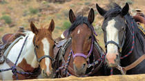 2-Hour Horseback Riding through Red Rock Canyon, Las Vegas, Horseback Riding