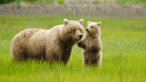 Bear Viewing Excursion and Airplane Adventure Tour, Anchorage, 4WD, ATV & Off-Road Tours