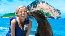 Sea Life Park Hawaii Admission and Underwater Sea Lion or Shark Swim, Oahu