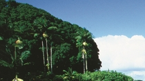 Hilo Landausflug: Volcanoes National Park und Rainbow Falls, Big Island of Hawaii, Ports of Call ...