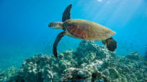 Kahului Shore Excursion: Snorkeling Adventure, Maui, Plantation Tours