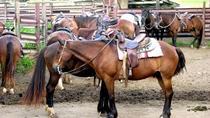 Horseback Tour at Kualoa Ranch on Oahu