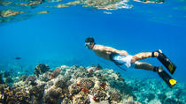 Waianae Coast Snorkel Cruise with Dolphin and Seasonal Whale Watching from Oahu, Oahu, Catamaran ...