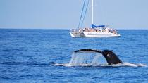 "Bootstour ""Mit den Walen aufwachen"", Big Island of Hawaii, Dolphin & Whale Watching"