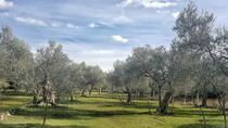 Olive plantation - visit and degustation, Kotor, Plantation Tours