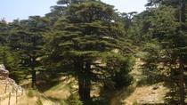 Cedars - Besharre - Qozhaya (Full day), Beirut, Cultural Tours