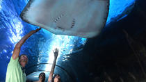 Maui Ocean Center Admission, Maui, Attraction Tickets