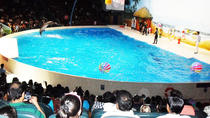 Dolphin Show, Dubai, Theater, Shows & Musicals
