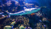 Shark Reef en el Mandalay Bay Hotel and Casino, Las Vegas, Entradas para atracciones