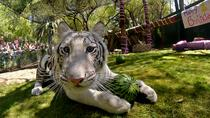 Siegfried & Roy's Secret Garden and Dolphin Habitat al Mirage Hotel and Casino, Las Vegas, ...