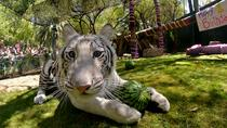 Siegfried & Roy's Secret Garden and Dolphin Habitat at the Mirage Hotel and Casino, Las Vegas, ...
