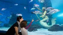Zonder wachtrij: entreebewijs voor SEA LIFE Melbourne Aquarium, Melbourne, Attraction Tickets