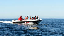 Close encounter whale and dolphin watching, Garden Route, Dolphin & Whale Watching