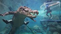 Cage of Death at Darwin's Crocosaurus Cove, Darwin, Multi-day Tours