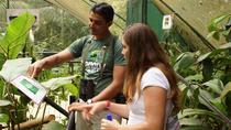 Rainforest Adventure at Braulio Carrillo National Park, San Jose, Nature & Wildlife