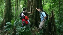 Rainforest Adventure from San Jose, San Jose, Day Trips