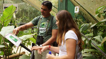 Rainforest Adventures Nature Exploration Tour, San Jose, Nature & Wildlife