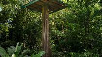 St Lucia Shore Excursion: Rainforest Aerial Tram, Zipline and Hiking