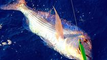 Sea-Fishing tour from Sorrento, Sorrento, Day Cruises