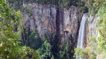 Springbrook National Park Rainforest and Waterfall Day Trip from Brisbane, Brisbane, Day Trips