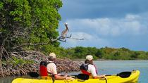 Tour de St. Thomas Kayak: Sunset Birding at Mangrove Lagoon, Saint Thomas, Kayaks y canoas