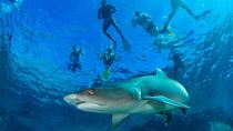 Ultimate Snorkel with Sharks Encounter in Fiji, Denarau Island, Shark Diving
