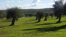 Cork and Olive Oil Tour from Faro, Faro, Cultural Tours