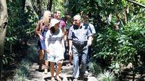 Heredia City Tour and Coffe Britt Plantation Visit by Train from San Jose, San Jose, Coffee & Tea...