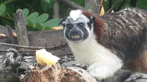 Soberania National Park, Monkey Island and Indian Village from Panama City, Panama City, Full-day ...