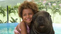 Sea Lion Encounter at Coral World Ocean Park, St Thomas, Water Parks