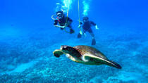 Snuba Adventure at Coral World Ocean Park, St Thomas, Adrenaline & Extreme