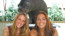 St Thomas Shore Excursion: Sea Lion Encounter at Coral World Adventure Park, St Thomas, Ports of ...