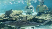 Swimming with Sharks at Coral World Ocean Park, St Thomas