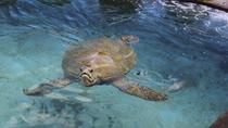 Turtle Encounter at Coral World Ocean Park in St Thomas, St Thomas, Nature & Wildlife