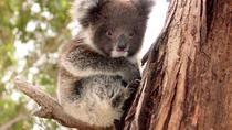 Island Life - Full Day Kangaroo Island Wildlife Tour, Kangaroo Island, Day Trips