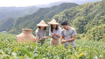 Private 1-Day Tea Experience in Taipei, Taipei, Day Trips