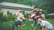 Private Tea Village and Taipei Sightseeing Day Tour, Taipei, Cultural Tours