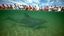 Bunbury Dolphin Discovery Centre: General Entry, Bunbury, Attraction Tickets
