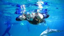 Dolphin Discovery Centre Swim Tour, Bunbury, 4WD, ATV & Off-Road Tours
