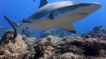 Shark Scuba Diving Safari (qualified divers only), Grand Baie, Scuba Diving