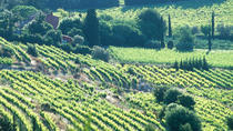 Full-day Wine Tour around Bandol & Cassis from Marseille, Marseille, Wine Tasting & Winery Tours