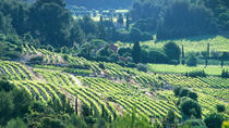 Half day Wine Tour in Bandol & Cassis from Aix en Provence, Aix-en-Provence, Wine Tasting & Winery ...